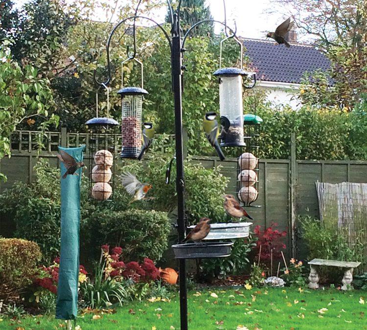 Bird Watching With One Way Vision Laminates