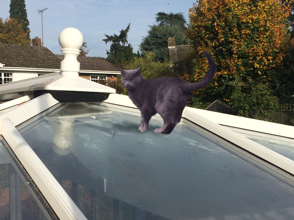 Cat stuck on conservatory roof