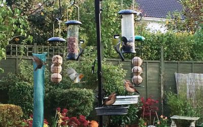 Bird Watching With One Way Vision Laminates